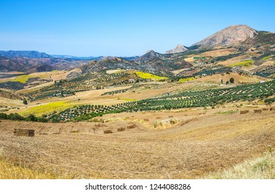 Beautiful landscape with olive gardens and fields near Malaga, Andalusia, Spain.