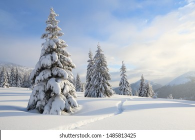 Beautiful landscape on the cold winter day. On the lawn covered with snow there is a trodden path leading to the high mountains with snow white peaks, trees in the snowdrifts.