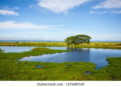 Beautiful landscape of Pantanal wetlands, Pantanal, Brazil