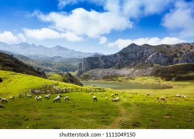 Beautiful landscape in the Peacks of Europe with a flock of sheep
