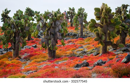 Beautiful landscape with prickly pear cactus. Bright colors. Galapagos Islands. An excellent illustration.