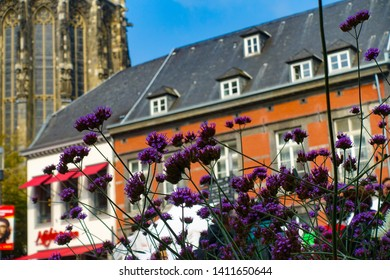 Beautiful landscape of purple flowers in front of the historical buildings in Aachen, Aachen, Germany, 30.08.2018