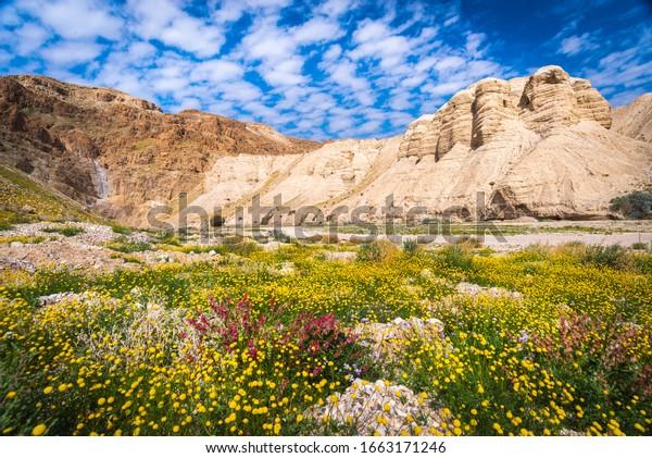 Cuevas de Qumran con flores, desierto de Judea Israel