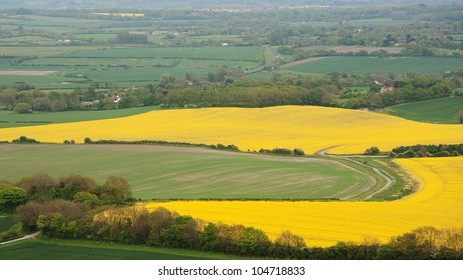 Beautiful landscape of rapeseed fields stretching into distance of bright yellow and green