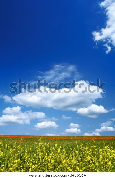 Beautiful landscape - with rapeseed flowers in foreground - great blue sky with fluffy clouds