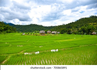 beautiful landscape rice field in pai thailand.