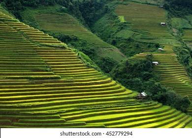 beautiful landscape rice terrace view in hmong village at la pan tan mountain , mu cang chai , yen bai , vietnam