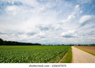Beautiful landscape with road, green corn fields and blue sky covered partially with fluffy white clouds in the background.