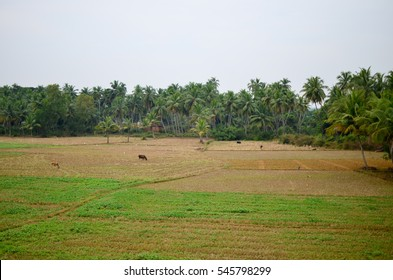 Beautiful landscape of rural India. Scene captured during travel by Konkan Railway, between Goa - Kundapur section
