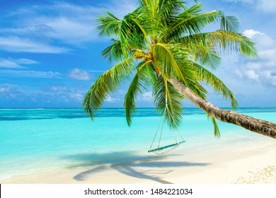 Beautiful landscape of sandy beach in Indian Ocean and wooden swing on a rope on a palm tree