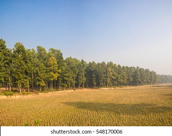 Beautiful landscape scenery in Bangladesh with some harvested rice paddies in the foregrond and a green forrest in the background under the bright blue sky with some sun flare.