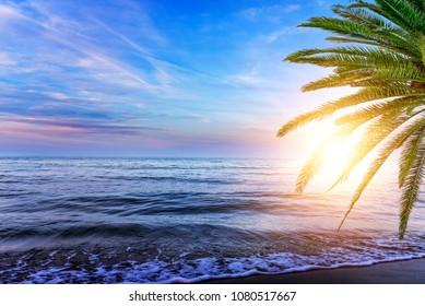 Beautiful landscape of sea coast at sunset with palm trees. Vacation.