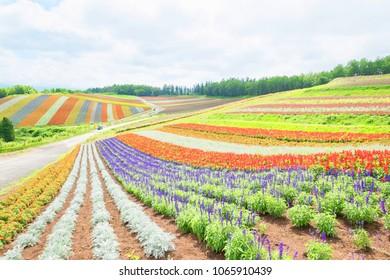 beautiful  landscape in Shikisai no oka and japan