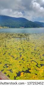 A beautiful landscape shot at Lake Abant in Bolu, Turkey