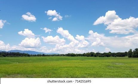 Beautiful landscape of sky and rice field in spring season for agriculture concept.