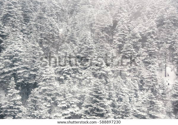 Beautiful landscape of snow forest in snowy day
