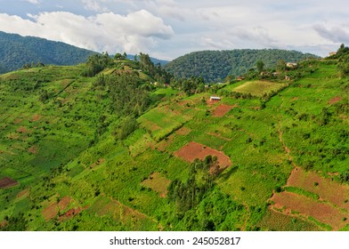 Beautiful landscape in southwestern Uganda, at the Bwindi Impenetrable Forest National Park, at the borders of Uganda, Congo and Rwanda. The Bwindi National Park is the home of the mountain gorillas.