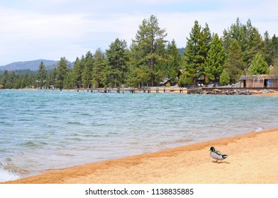 Beautiful Landscape in Spring at Lakeside of Lake Tahoe in California, United States