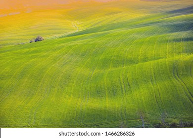 Beautiful landscape, spring nature. Grass texture.  Nature landscape. View from above of sunny fields on rolling hills in Tuscany, Italy