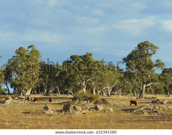 Beautiful landscape in Springton, South Australia.