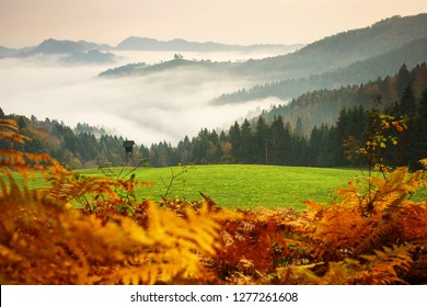 Beautiful landscape with St. Tomaz Church from Slovenia with fog and mountains in background in autumn season