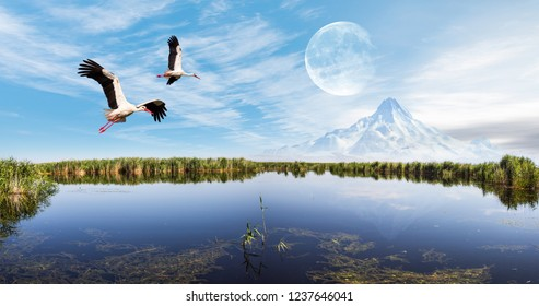 Beautiful landscape with Sultanmarshes (bird paradise) next to erciyes mountain, Kayseri - White Stork Flying