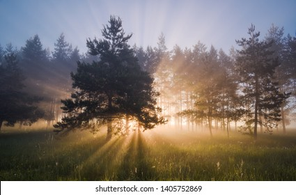 Beautiful landscape with sun rays coming through pine wood at summer sunrise