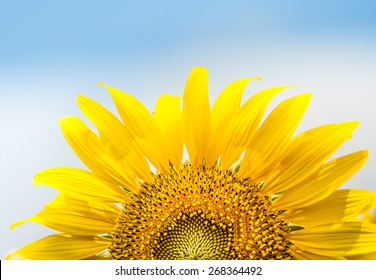 Beautiful landscape with sunflower