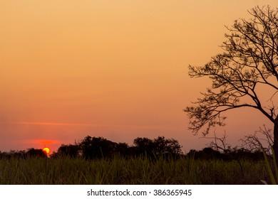 Beautiful  landscape of the sunset.