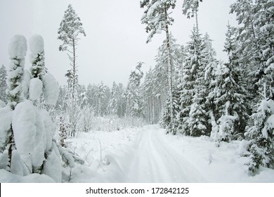 Beautiful landscape with a thick snow-covered forest road in winter.