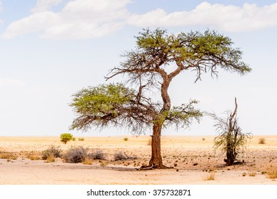 Beautiful landscape of a tree in the desert, Namibia