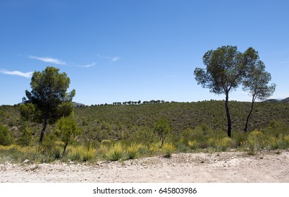 beautiful landscape with trees in Calasparra, Spain