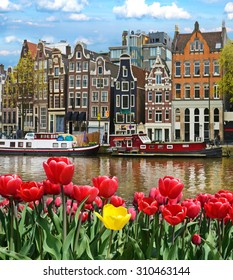 Beautiful landscape with tulips and houses in Amsterdam, Holland (greeting card - concept)