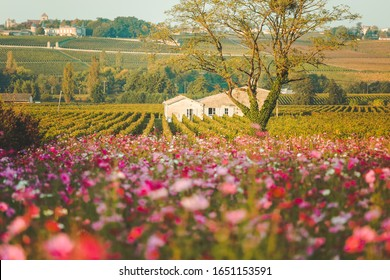 Beautiful landscape of Saint-Émilion is a UNESCO World Heritage Site and red wine areas of Bordeaux Nouvelle-Aquitaine in Southwestern France.