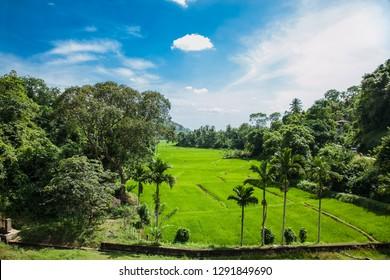 Beautiful landscape of Uva province in Sri Lanka.