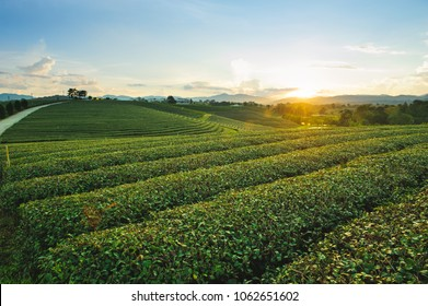 Beautiful landscape view of choui fong tea plantation in the evening with sunset at Maejan , tourist attraction at Chiangrai province in thailand