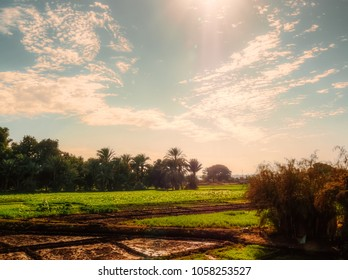 A beautiful Landscape view for farm fields near kom ombo in Aswan, Egypt