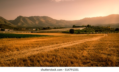 A beautiful landscape view of a golden cornfield in Andalusia Southern Spain