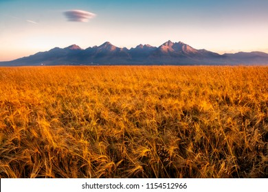 Beautiful landscape view of High Tatras mountains at sunrise with wheat field in foreground, Slovakia