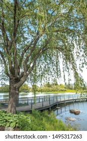 A beautiful landscape view with a large mature weeping willow tree framing the view along the shoreline of a pond with a wood boardwalk foot bridge snaking and curving across the water.