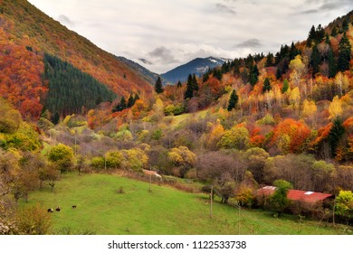 Beautiful landscape view of the mountains of the Rila national park in Bulgaria with vibrant autumn colors in the forest