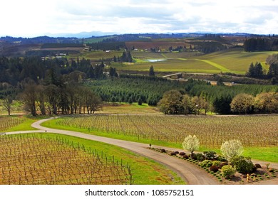 Beautiful landscape - the view on green vineyards, trees and roads from the hill, the lake in the background
