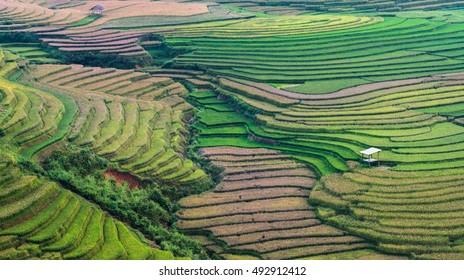 Beautiful Landscape view of Rice terraces in Tu Le, Vietnam
