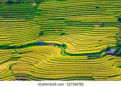 beautiful landscape view of rice terraces in LaoCai (North Vietnam)