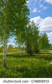 beautiful landscape with a view of the river and birch trees in Russia
