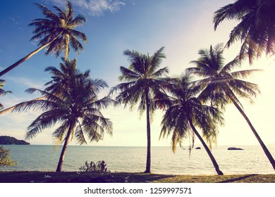 Beautiful landscape view in with tropical palm trees on the beach.Asia traveling and vacation concept.