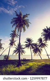 Beautiful landscape view in vertical with tropical palm trees on the beach.Asia traveling and vacation concept.