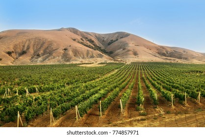 Beautiful landscape with vineyard, Crimea