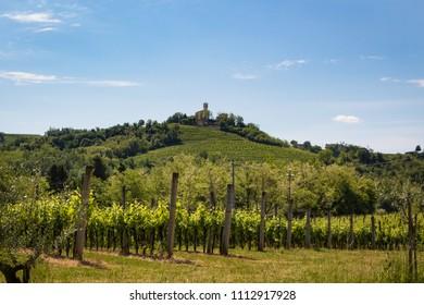 Beautiful landscape. Vineyards of Collio area, in North-eastern Italy, close to Slovenian border. Gorizia, Friuli Venezia Giulia; Italy