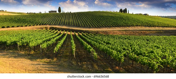 Beautiful landscape of Vineyards in Tuscany. Chianti region in summer season. Italy.